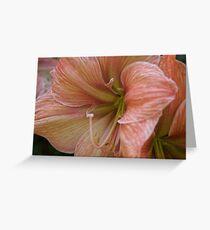 Peach Amaryllis Greeting Card