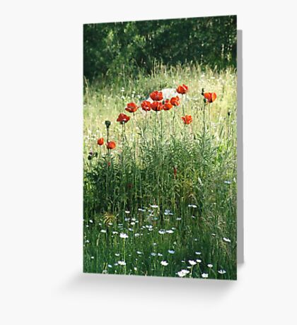 POPPIES AND DAISIES - OLD BOULDER CYN ROAD Greeting Card