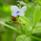Butterfly Flower  by Sunshinesmile83
