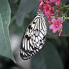 Butterfly 2 by Sunshinesmile83