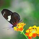 Butterfly 5 by Sunshinesmile83