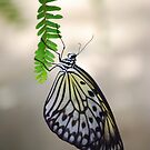Butterfly 6 by Sunshinesmile83