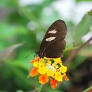Butterfly 10 by Sunshinesmile83