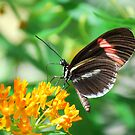 Butterfly 11 by Sunshinesmile83