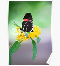 Butterfly 20 Poster