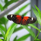 Butterfly 22 by Sunshinesmile83