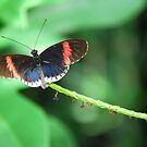 Butterfly 25 by Sunshinesmile83