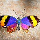 Butterfly 29 by Sunshinesmile83