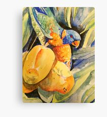 Lorikeet in Mango Tree 2 Canvas Print