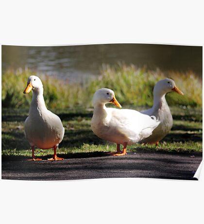 Three Little Ducks Poster