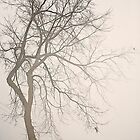 Single Tree in Winter Fog by Yannik Hay