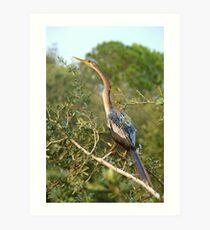 Gorgeous anhinga Art Print