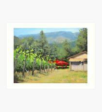 Delfino Vineyard Art Print
