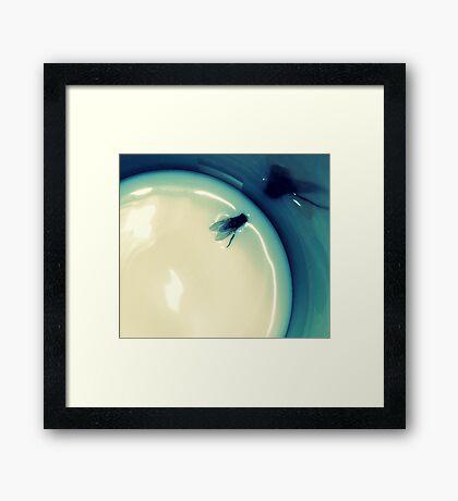 Fly in the Milk Framed Print