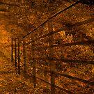 Autumn Walk by Tsitra