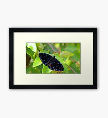 Speckled  Framed Print