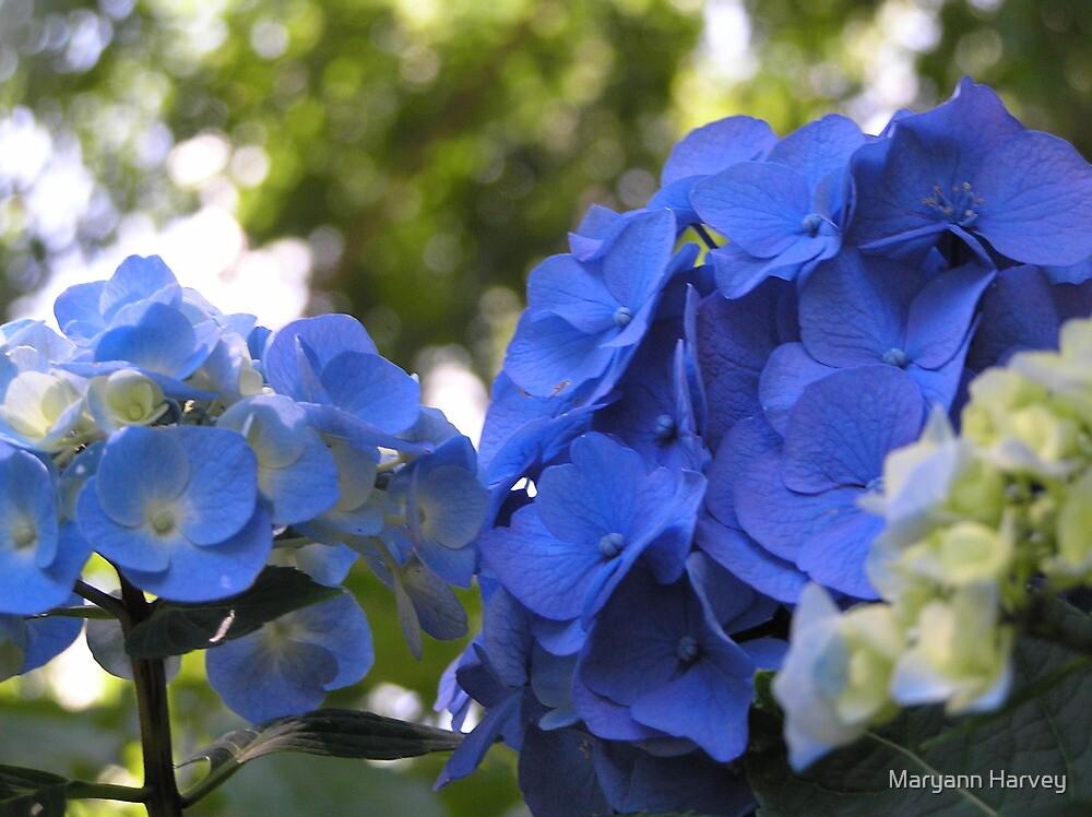 Deep Blue by Marriet