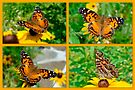 American Lady Butterfly Collage - Vanessa virginiensis by MotherNature