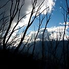 Untitled- Mt Sterling Branches by claire-virgona