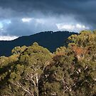 Untitled- Mt Buller Contrast by claire-virgona