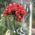 """""""Rosebud"""" Geranium by Pat Yager"""