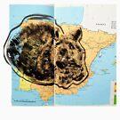 Animal Atlas - Cat World Climates by Alexcarletti