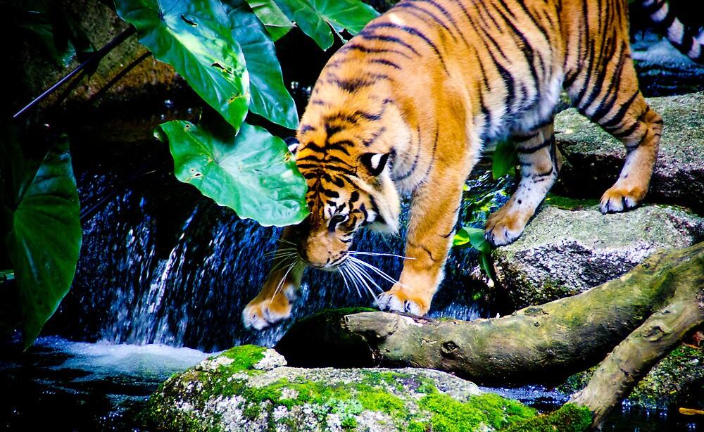 Melbourne Zoo by codieglann