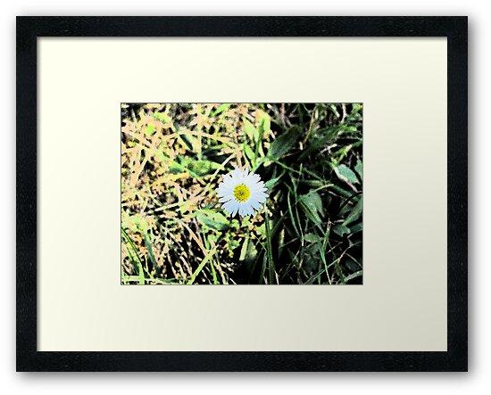 Daisy by Jo-Lou