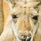 Kangaroo by Ryan  Fisher