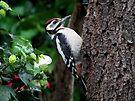 Great spotted woodpecker by Peter Wiggerman