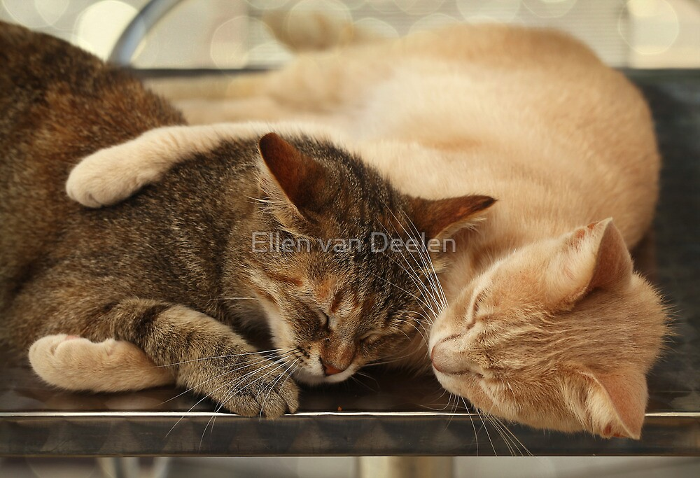 Real friendship (2) by Ellen van Deelen