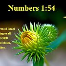 Israel did according to all that the LORD commanded. . . by aprilann