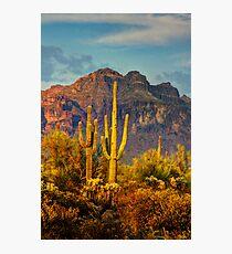 The Desert Golden Hour II  Photographic Print