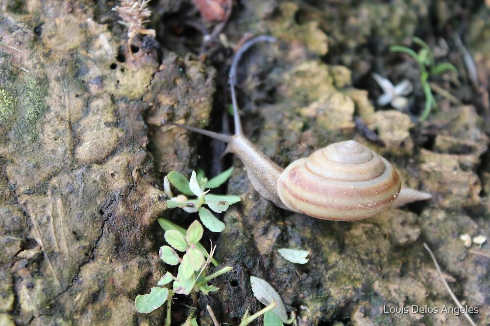 Garden Snail  by Louis Delos Angeles