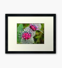 Winsome Weed  Framed Print