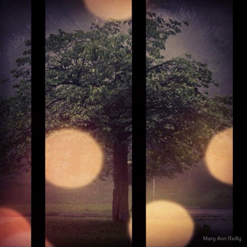 Dreaming of Fireflies by Mary Ann Reilly