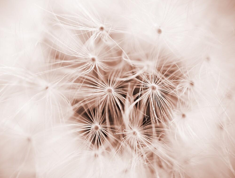 Dandelion Seedhead by Ellesscee