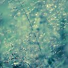 Grasses by lorrainem