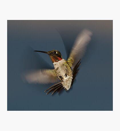 Humming Bird! Photographic Print