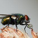 Fly! by vasu