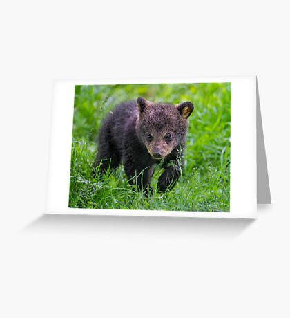 Baby Steps Greeting Card