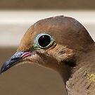 BIRD'S EYE by gracestout2007