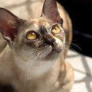 Study of a Cat by Sandy Edgar