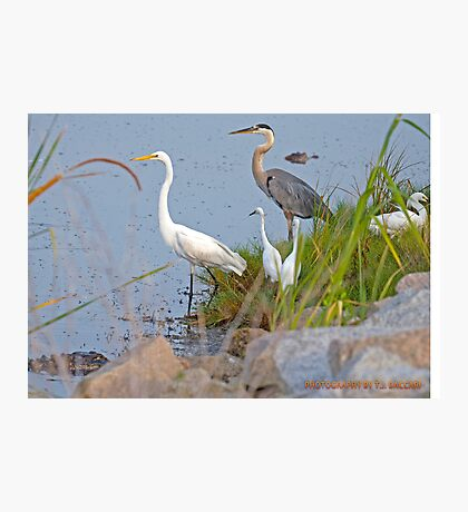 Resting by the Shore Photographic Print