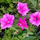 Purple Flowers by Shoshonan