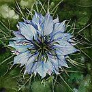 Cornflower by samcannonart