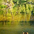 Deer in the Merced River, Yosemite NP, California by Pete Paul