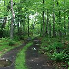the trail leading to abby point by wolf6249107