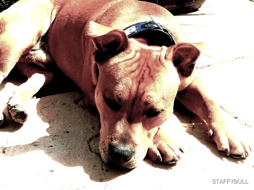 Lazy Staffy. by STAFFYBULL