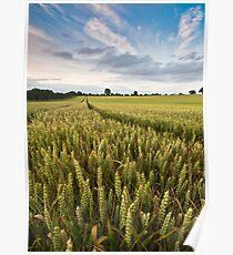Wheat, Suffolk Poster
